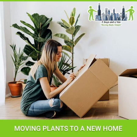 Moving Plants To A New Home